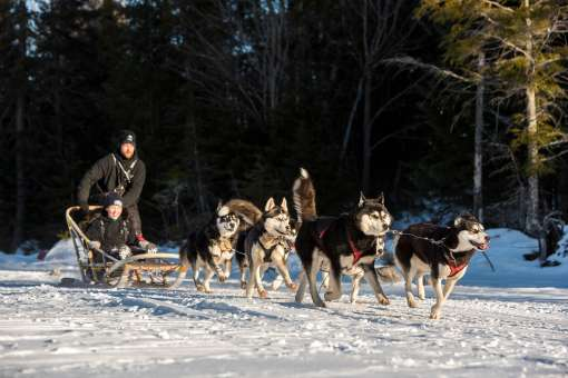 Dog sledding  excursions