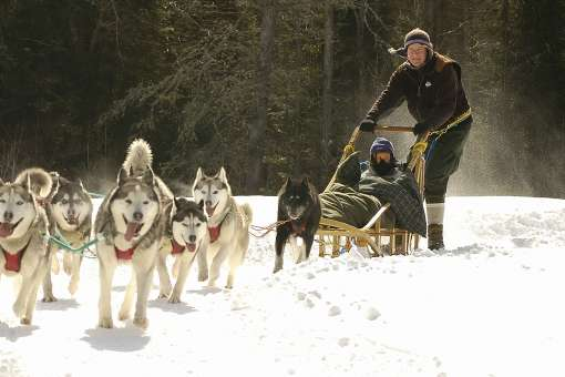 Dogsledding adventures in Mont-Tremblant