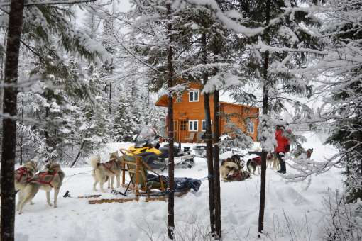 24 hours of dogsledding and boreal refuge