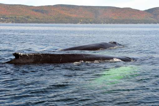 Whale and color fall (c) Marc Debain