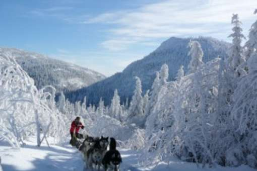 Half-day dogsledding