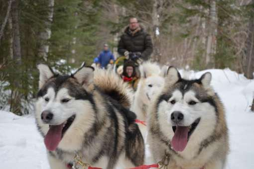 1 day of dogsledding and night at Grangette