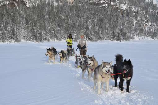 Dogsledding expedition of 2 days