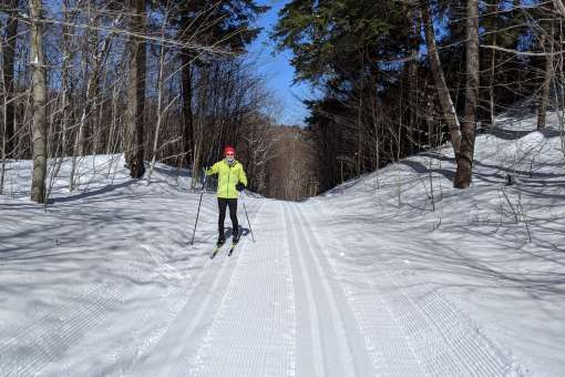 Cross-country skiing in Nature