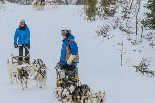 Musher experience in Charlevoix