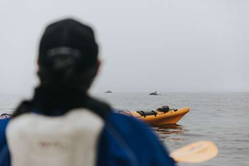 Whales observation in sea kayaking (c) Magalie Massey
