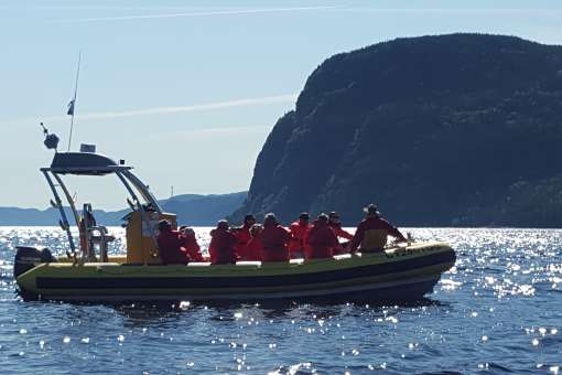 Fjord and whales cruises